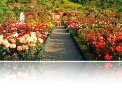 Rose Gardens Tour - Northeast