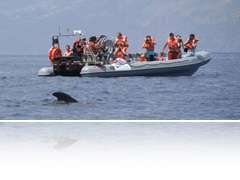 Rota dos Cetáceos - Swimming with wild dolphins/Dolphin & Whale whatching